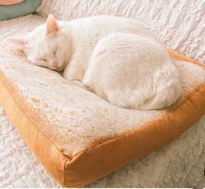 Cat sleeping on bread